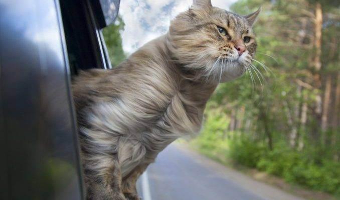 Правила перевозки животных в автомобиле - виды фиксации и правила безопасного путешествия
