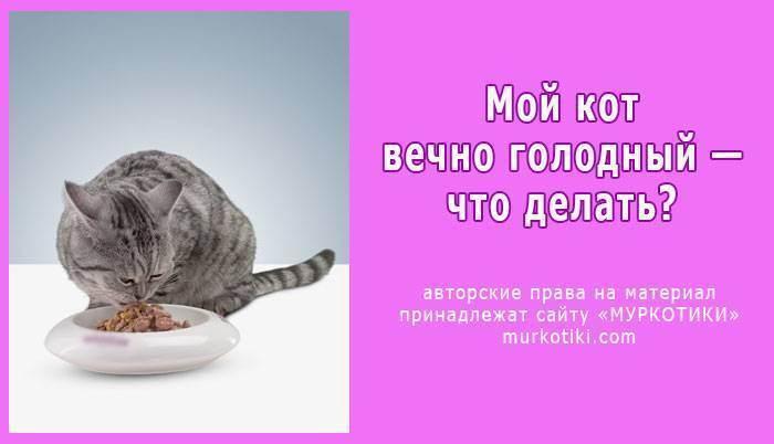 Как успокоить кошку, если она просит кота?