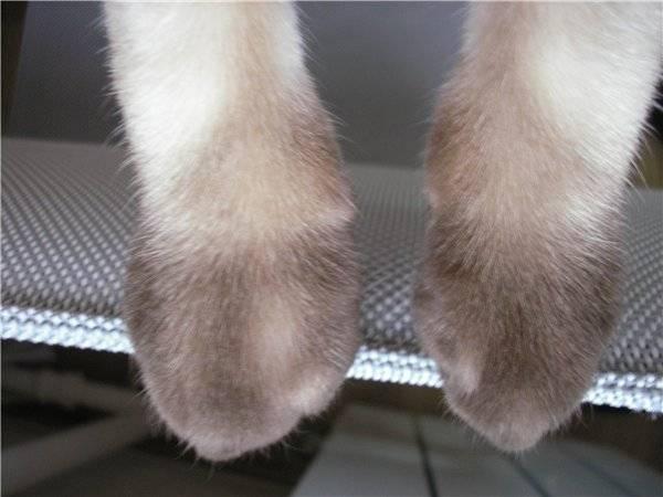 Перелом лапы у кошки: лечение в домашних условиях