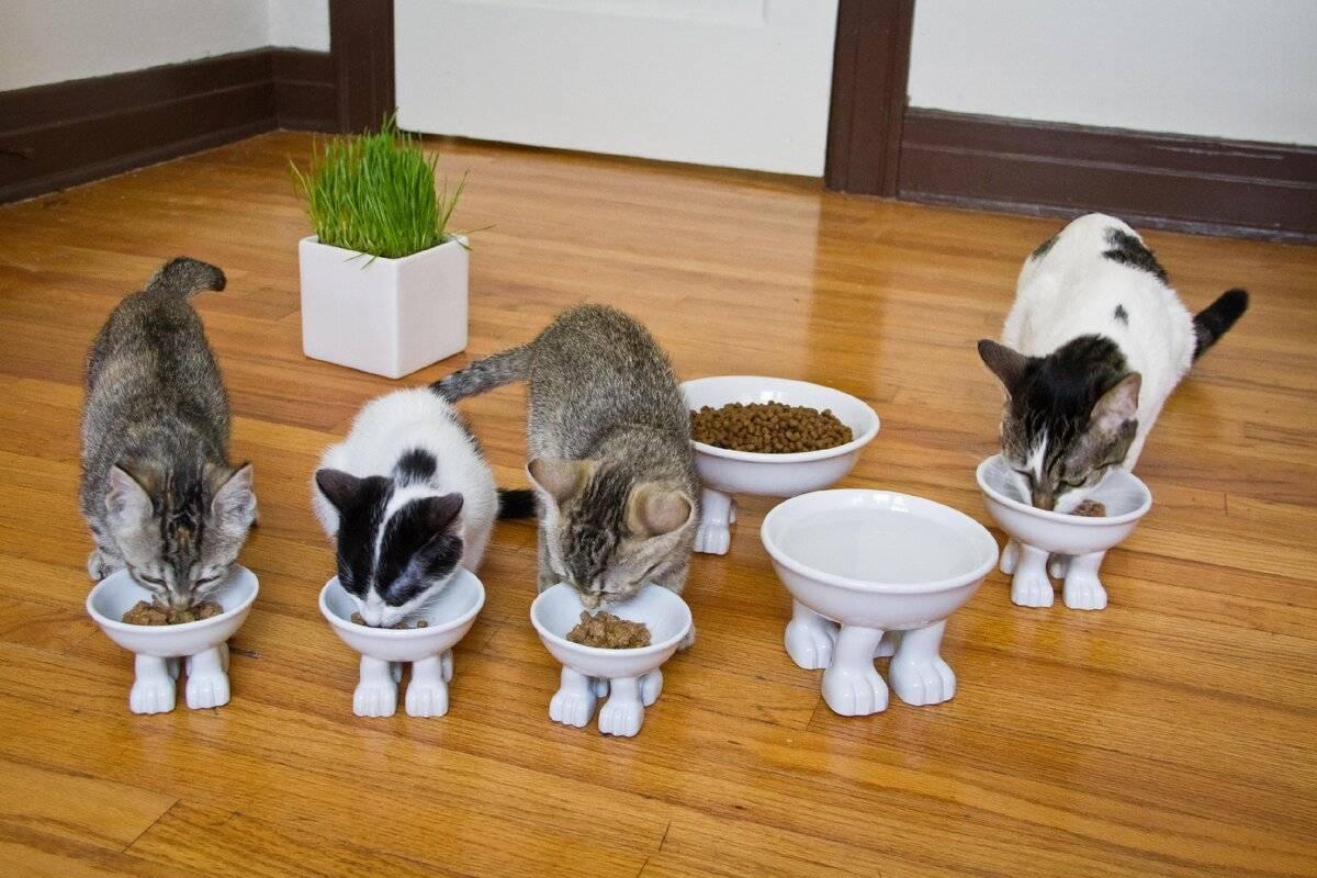 Как правильно выбрать ласкового и здорового котенка для дома или квартиры?