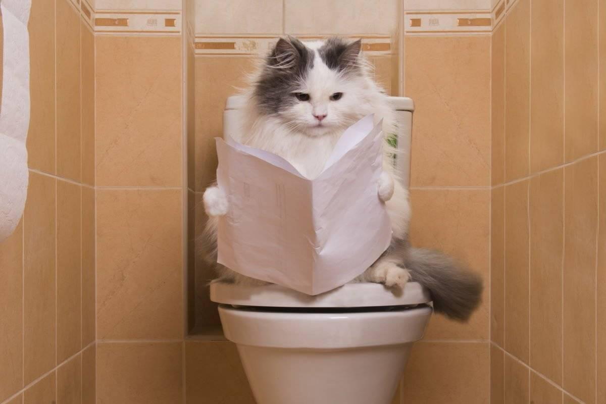 Как понять, что котенок хочет в туалет?