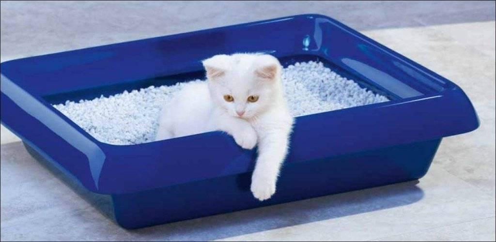 Как правильно пользоваться лотком для кошек с решеткой и наполнителем, как заполнять и как мыть