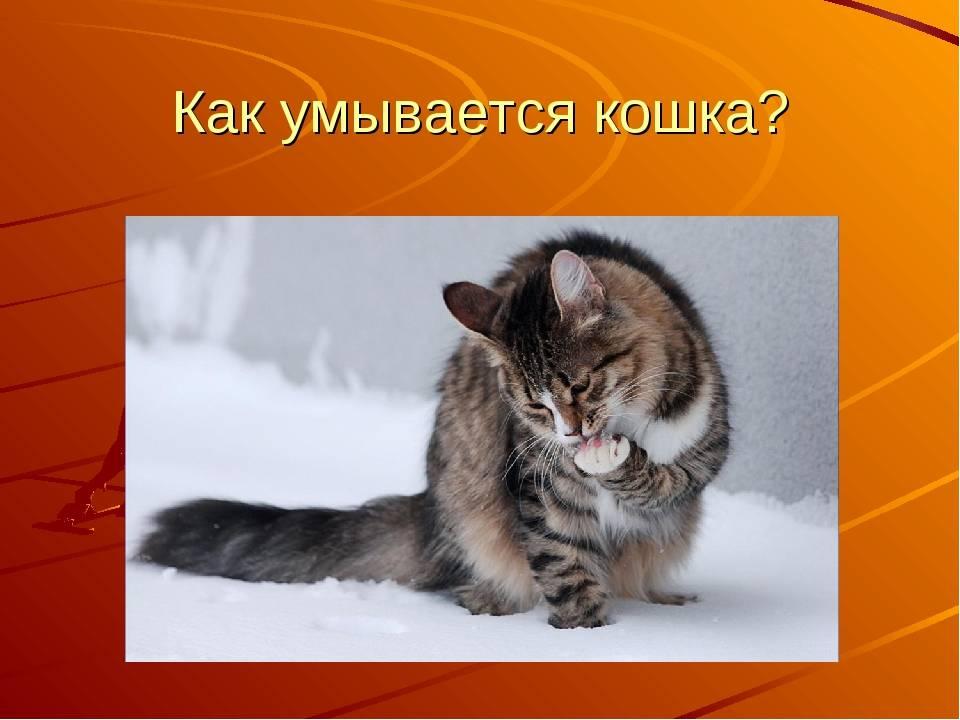 Умывание кошек или тайная жизнь домашних животных