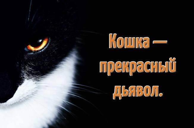 Как выбрать прикольные клички для котов? » клички.ру - красивые клички и имена для животных!