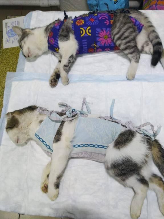 Почему кошка не пьет после стерилизации
