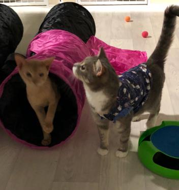 Как кошки переносят гостиницу для кошек