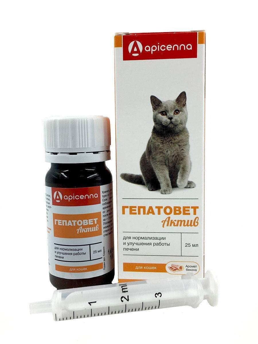 Гепатовет для кошек: инструкция по применению, отзывы
