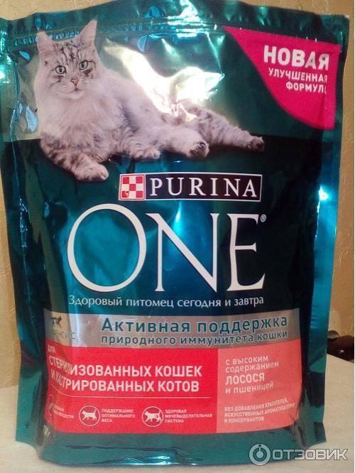 Корм для кастрированных котов | чем кормить, сухой корм