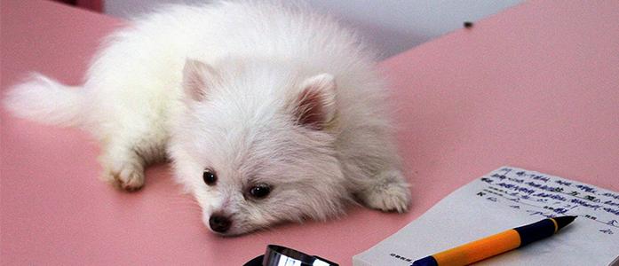Подскажите про вакцинацию собак!!!