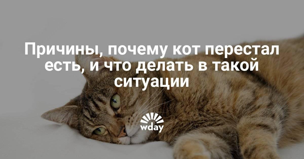 Что делать, если кошка не ест, причины и решения проблемы, видео