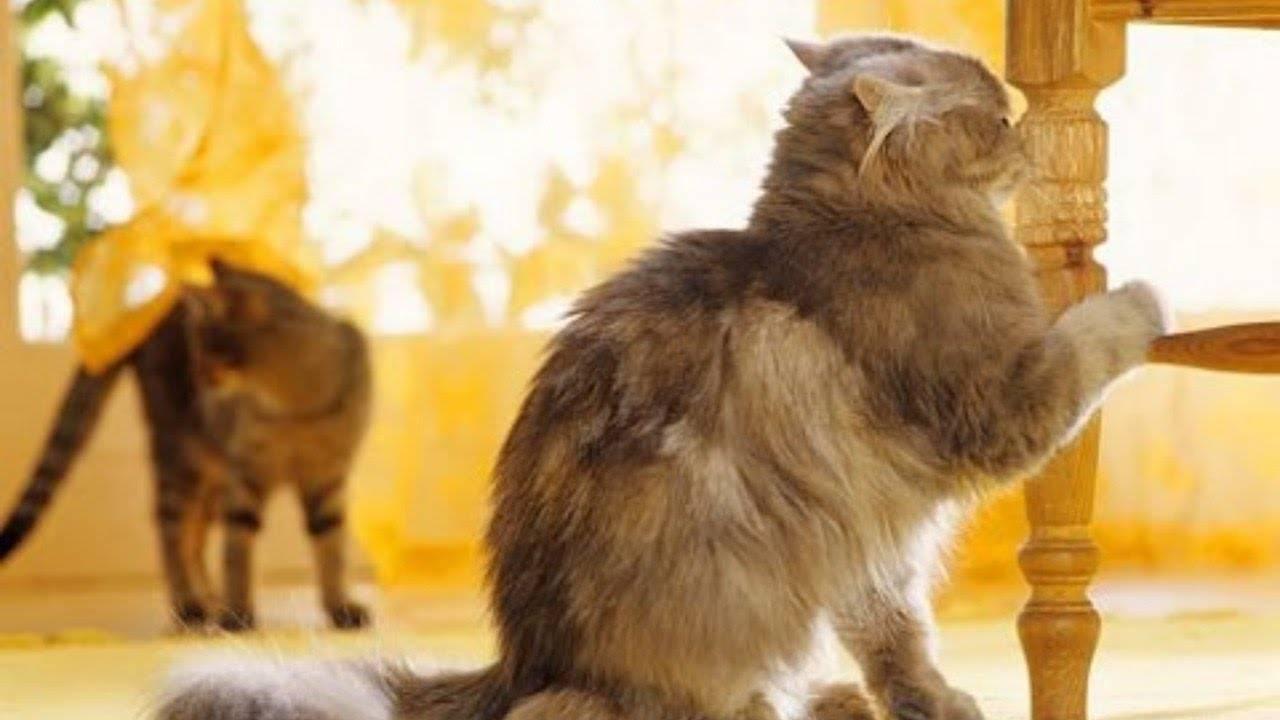 Что можно сделать если кот или кошка начала метить территорию в квартире