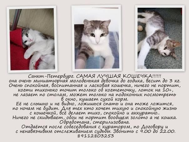 Первая вязка кошки и кота: особенности и советы владельцу