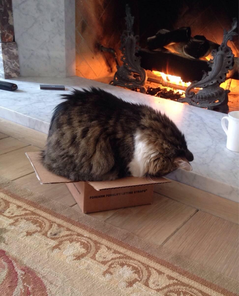 Почему кошки любят коробки и пакеты? почему коты лижут целлофановые пакеты и грызут картонные коробки? почему котам нравится спать в коробках?
