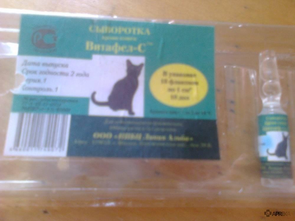 Глобулин «витафел» и сыворотка «витафел-с» для кошек: инструкция по применению