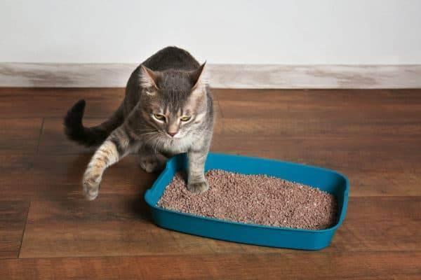 Причины по которым котенок перестал ходить в лоток