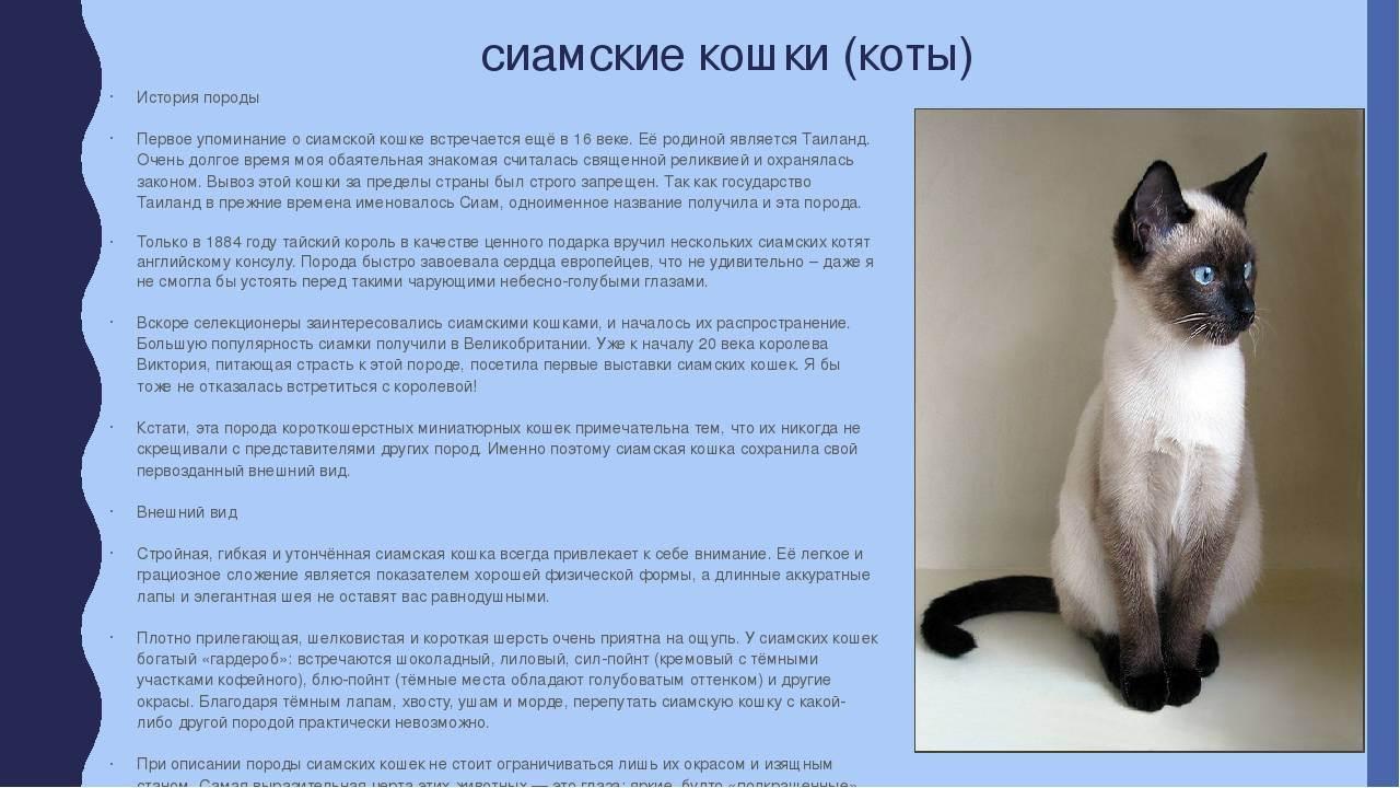 Породы кошек для детей, какую кошку лучше завести