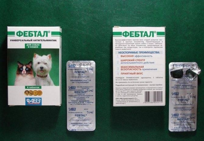 Таблетки от глистов для кошек – какие, как и когда давать