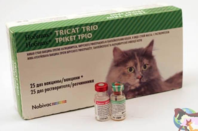 Почему нужно делать прививку от токсоплазмоза коту