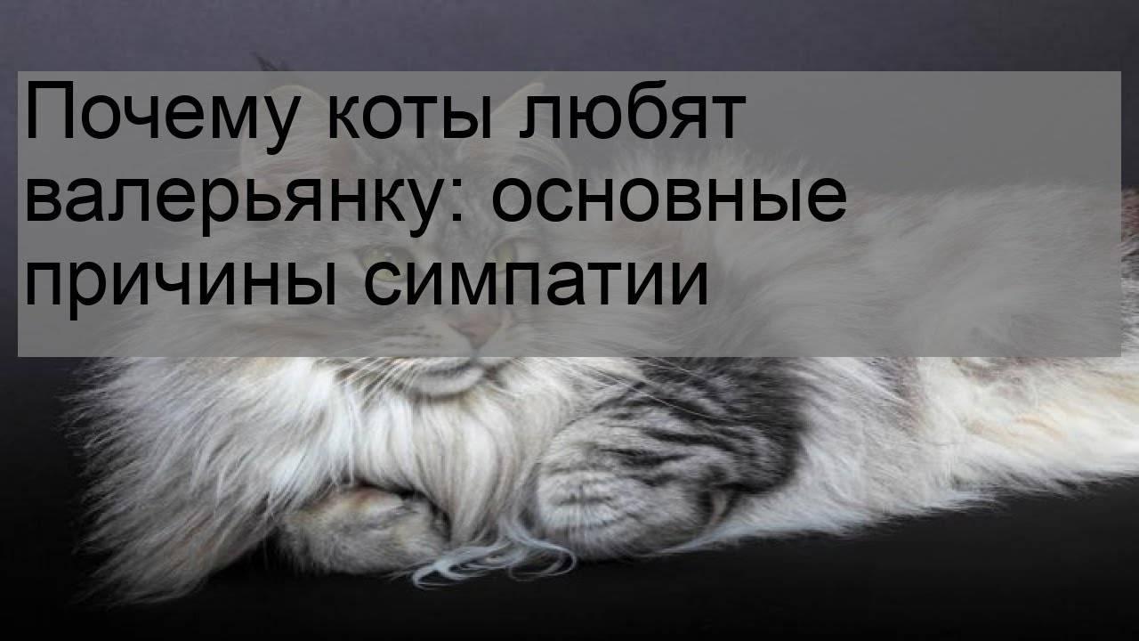 2 научных объяснения, почему коты любят валерьянку
