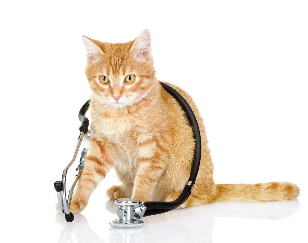 7 признаков, что кошка заболела
