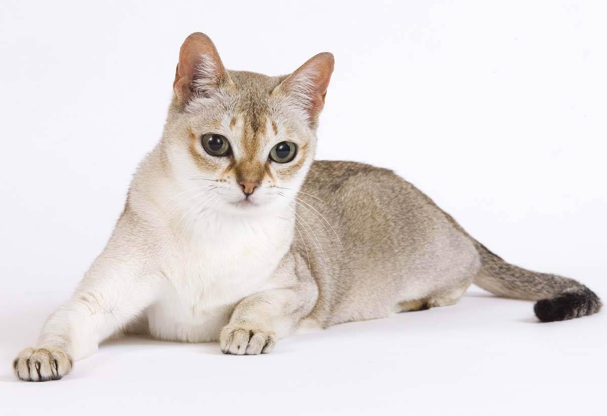Самые маленькие представители семейства кошачьих