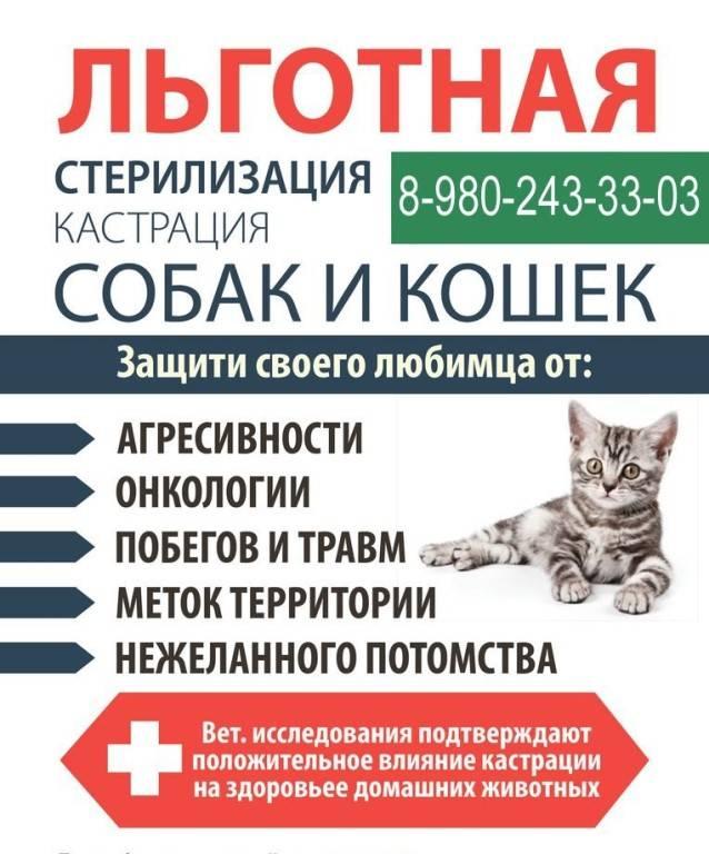 Химическая кастрация котов: особенности, плюсы и минусы процедуры