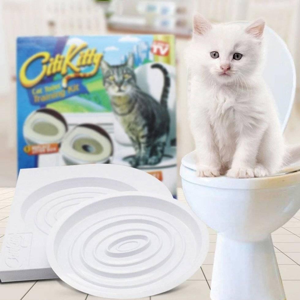 Как кошку приучить к унитазу: избавляемся от лотка и