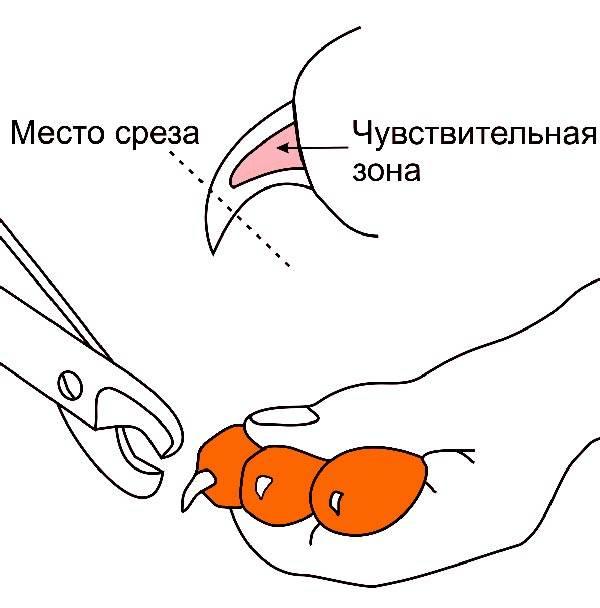 Как подстричь когти кошке: выбираем инструмент и следуем простым шагам