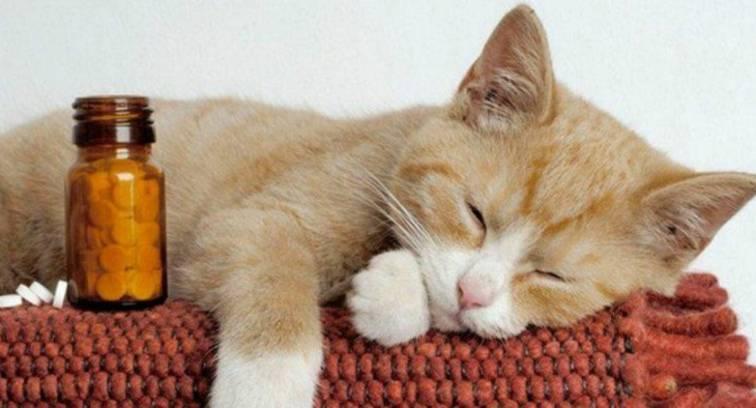 Чем нельзя кормить кошек, что нельзя давать кошке