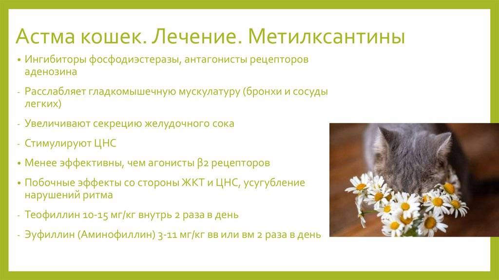 Астма у кошки – симптомы, первая помощь, лечение, профилактика