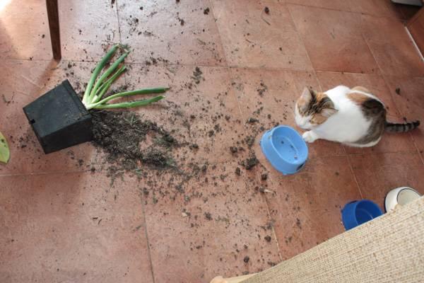 Как отучить кошку лазить в цветочные горшки в доме