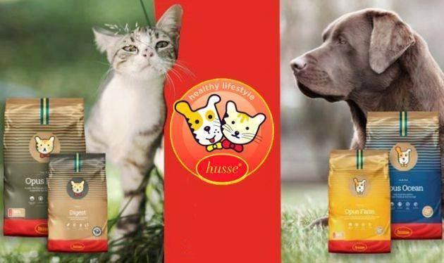 Сколько домашний кот может прожить без воды и пищи
