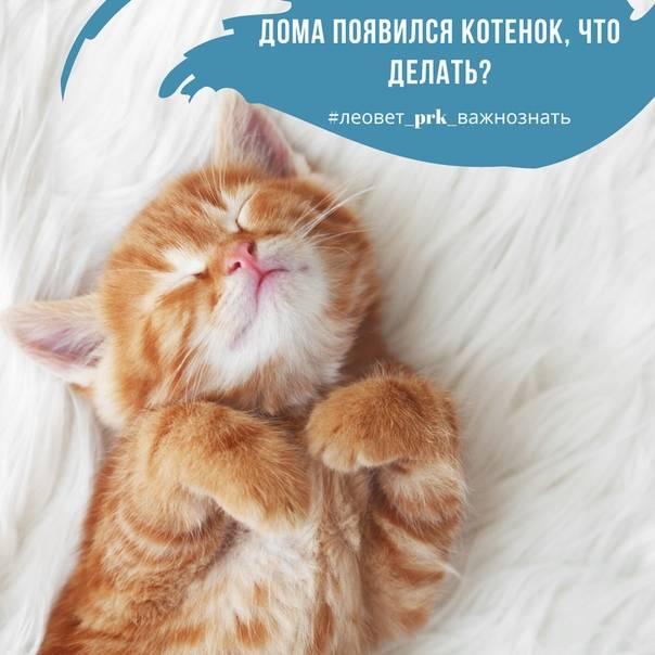Адаптация взрослой кошки в новом доме: переезд в новую семью - как помочь коту адаптироваться