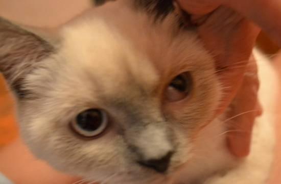 У котенка не открываются глаза: основные причины и что можно сделать