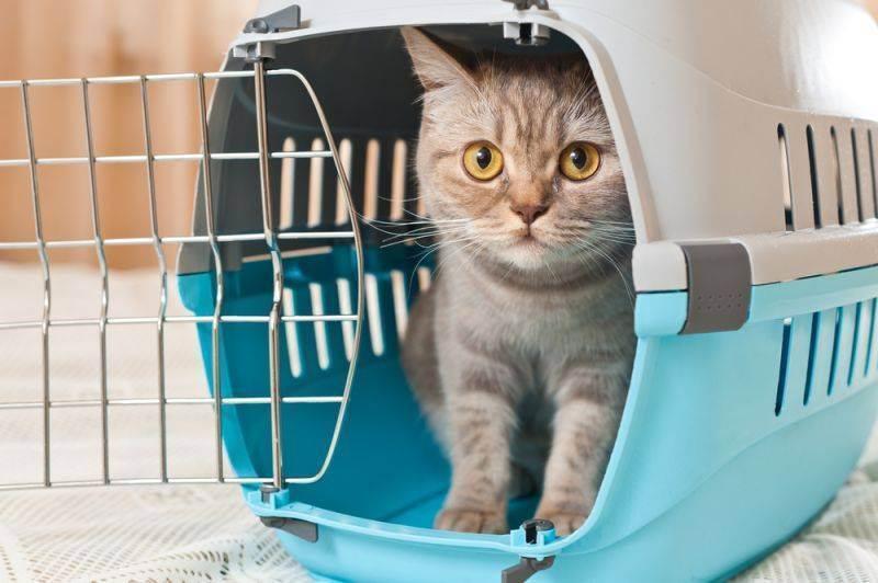 Как приучить кота к новому месту: полезные советы
