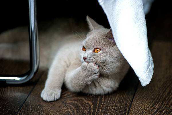 Как купать котенка: моем маленького сфинкса правильно в 1, 2 и 3 месяца