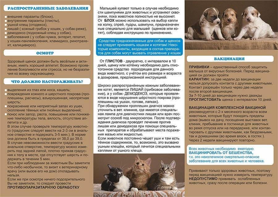 Какая память у кошек: исследования, факты, связь инстинктов и опыта