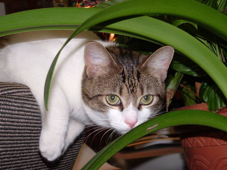 Пленка на глазах у кошки: причины симптома, как лечить
