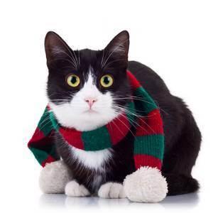 Кошки и морозы. как питомцы переносят холод?