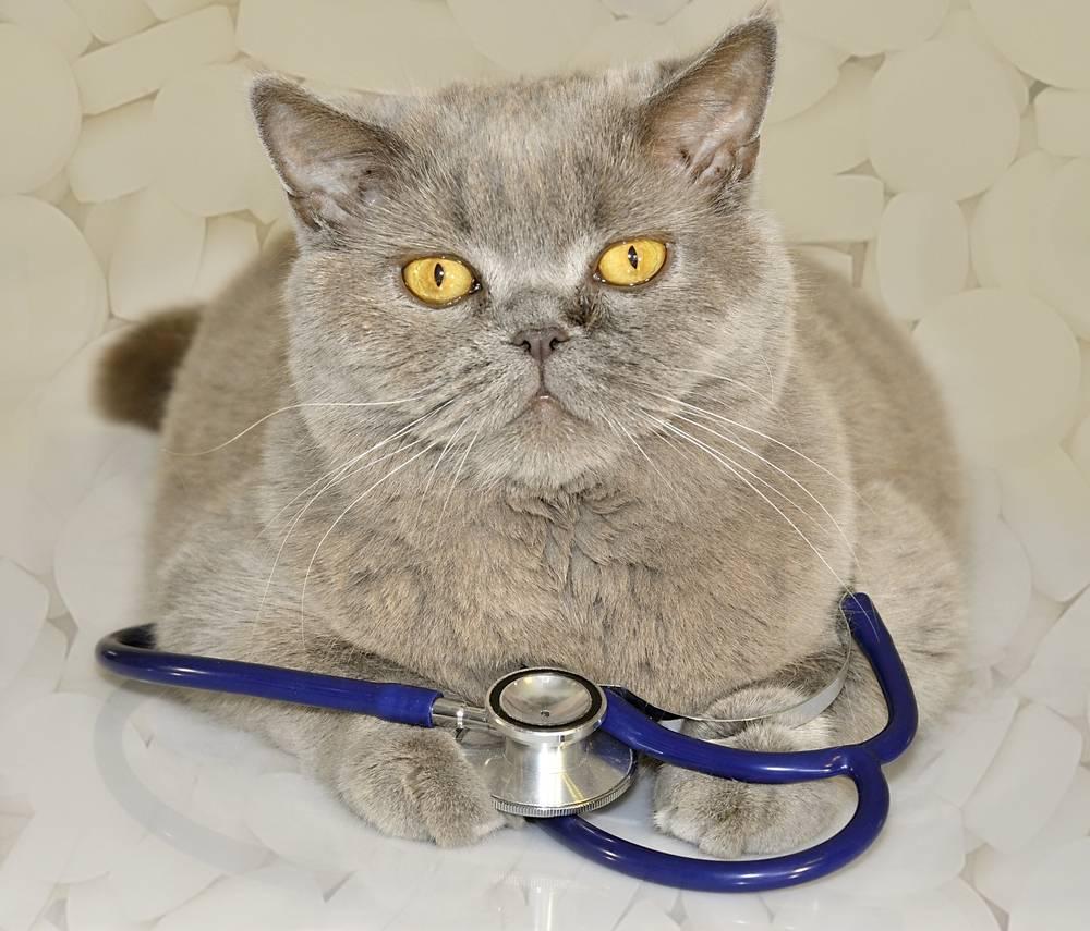 Вирус иммунодефицита кошек
