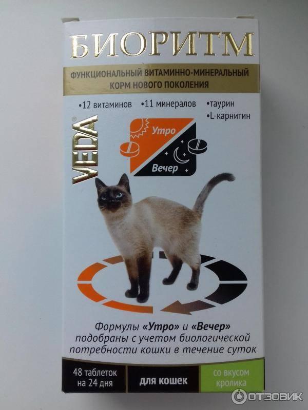 Топ-10 лучших витаминов для кошек и котов