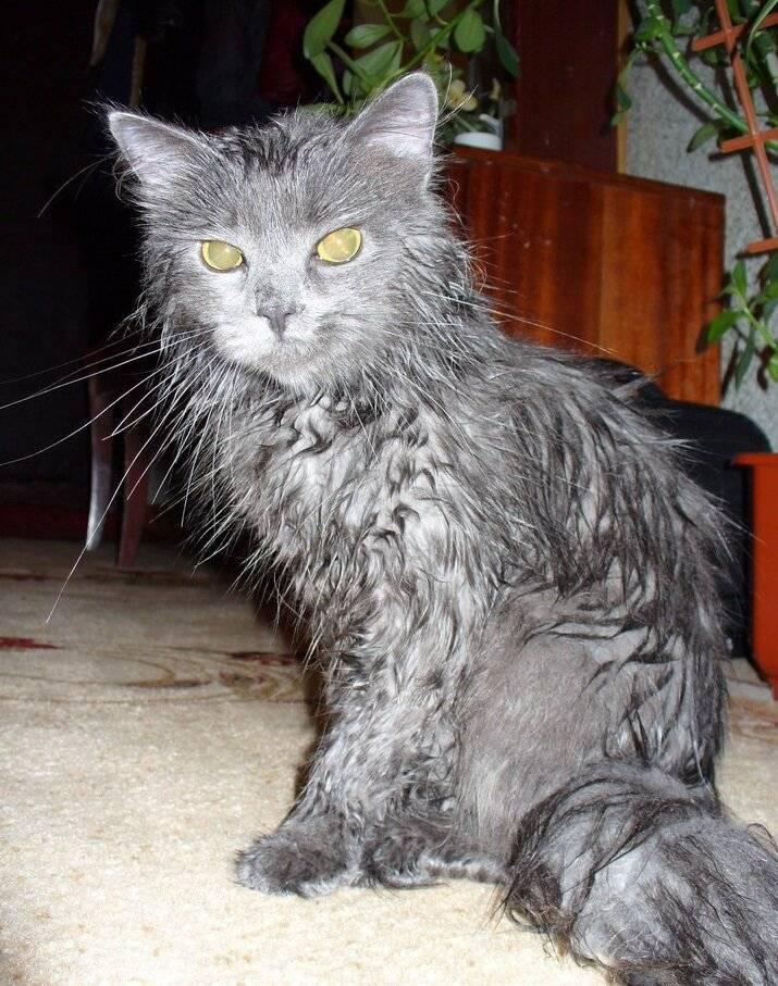 Как помыть кота, если он боится воды: полезные советы