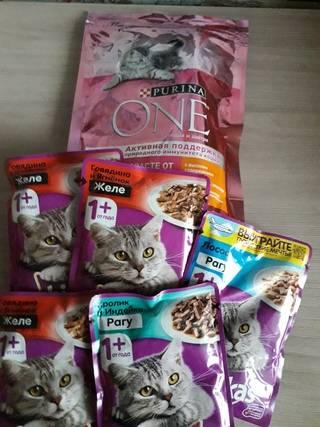 Влажный корм для кошек супер-премиум-класса: список необходимых компонентов, рейтинг лучших производителей