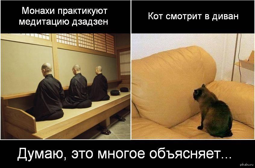 Кошка пристально смотрит в глаза. почему кошка смотрит в глаза. кто в доме хозяин: почему кошки смотрят в глаза человеку
