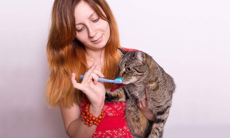 Запах изо рта у кошки: причины и лечение, как избавиться