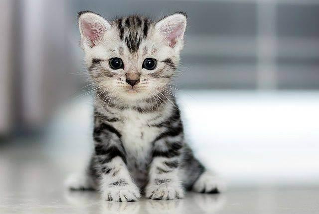 Самые популярные клички кошек, список лучших кличек кошек котов девочек мальчиков, классные распространенные кошачьи клички для кошек котят, популярные клички имена кошек котов мальчиков девочек