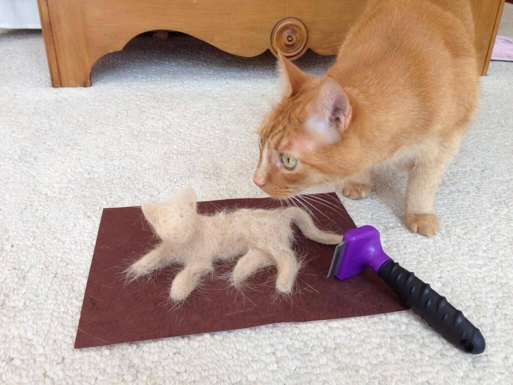 Почему в доме не приживаются кошки и коты, дохнут: народные приметы