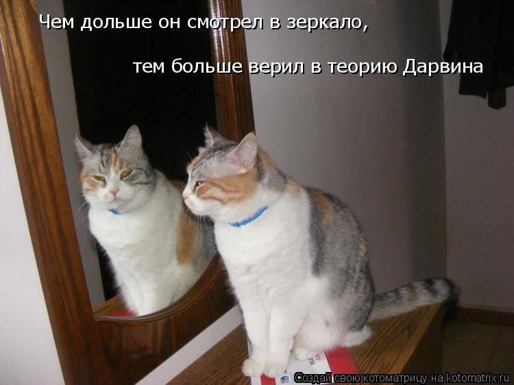 Видят ли кошки себя в зеркале. почему кошка смотрит в зеркало кошка постоянно смотрит в зеркало