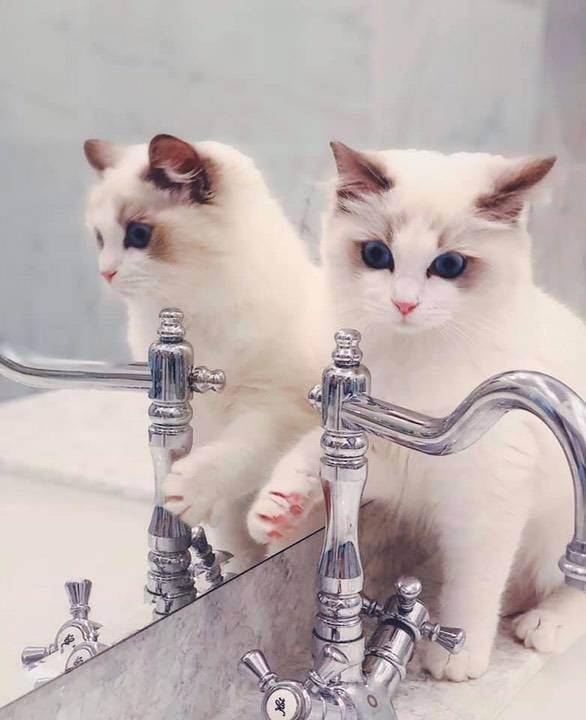 Признаки профессионального питомника кошек