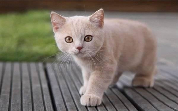 British cat names – 140+ brilliant ideas